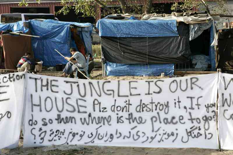 jungle2
