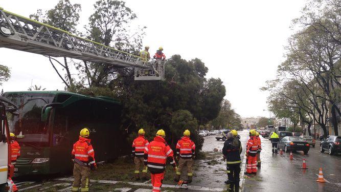 bomberos-trabajan-retirada-Paseo-Colon_1235587043_83341503_667x375